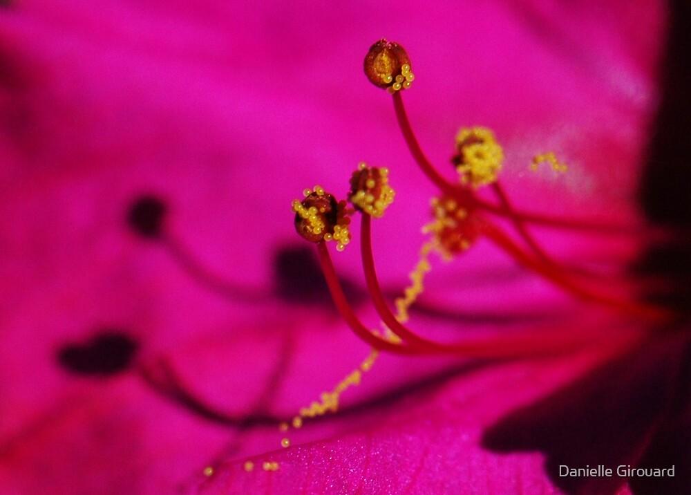 Pollen anyone? by Danielle Girouard