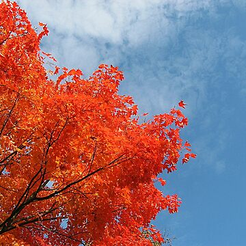The Brilliance of October Color against the Sky by amberwayne52