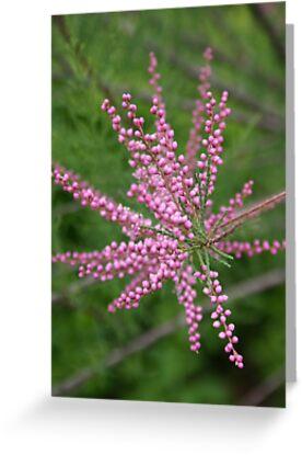 Purple Flowers Two by Raresoul