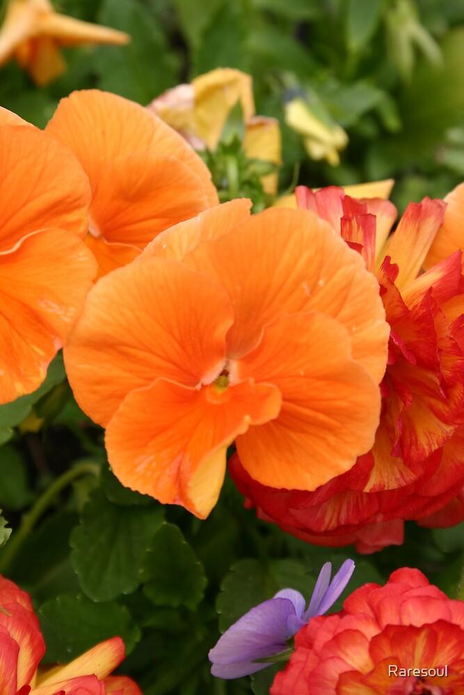 Orange Flowers by Raresoul