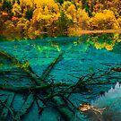 Wuhua Lake, Jiuzhaigou 九寨沟五华海 03 by Daniel H Chui