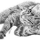 Little kitty in pencil by Phenglar