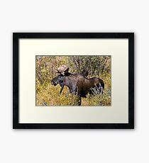 Like My Goatee? Framed Print