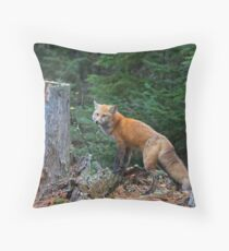 Red fox in Algonquin Park Throw Pillow