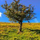 tree by Jordan Williams