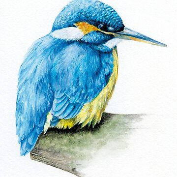 River Kingfisher watercolor  by sarahtrett