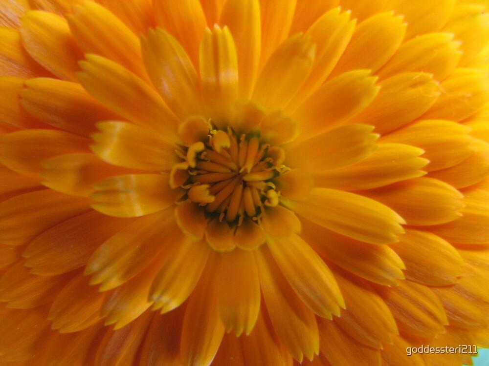 Burst of orange  by goddessteri211