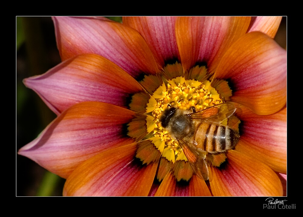All Work No Play Makes Johnny A Busy Bee by Paul Cotelli