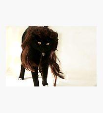 Mullet Cat! Photographic Print