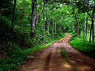 Spring Country Path by NatureGreeting Cards ©ccwri