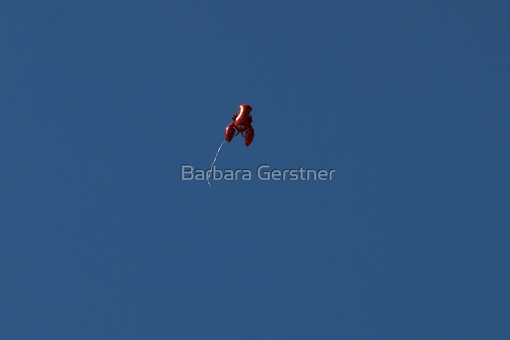 Airborn lobster by Barbara Gerstner