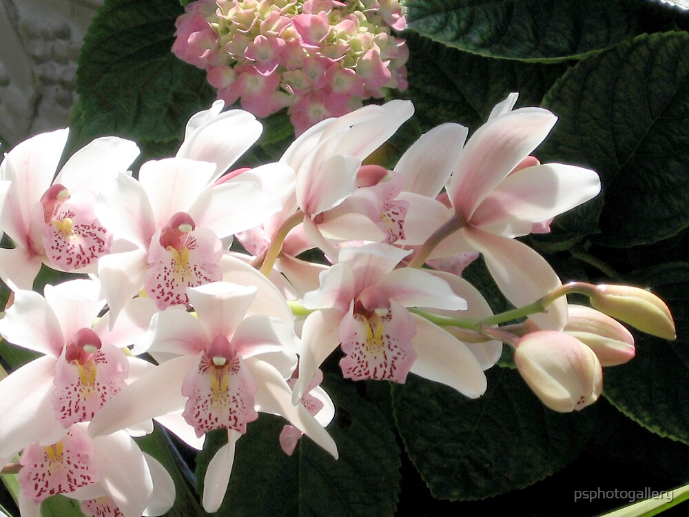 Orchids - #1 by psphotogallery