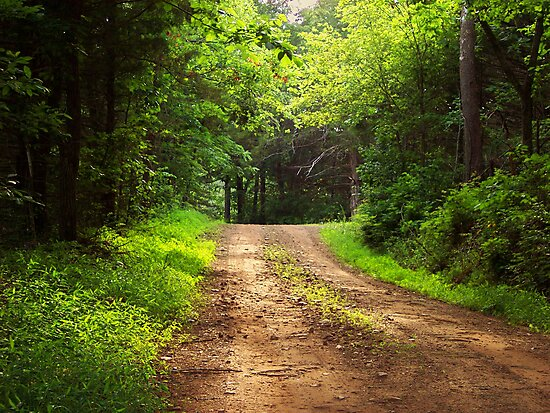 Country Lane by NatureGreeting Cards ©ccwri
