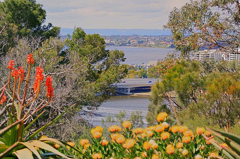 Flowery view by georgieboy98