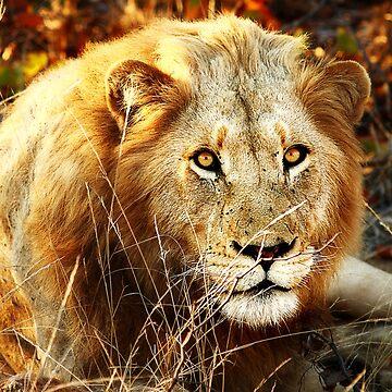 Kruger National Park, South Africa. 2009 II by GreenEyedHarpy