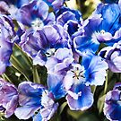 Purple blue tulips blooming abstract by Arletta Cwalina