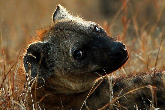 Kruger National Park, South Africa. 2009  IV by Damienne Bingham