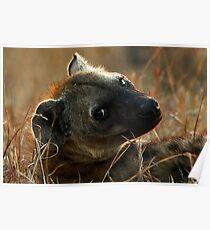 Kruger National Park, South Africa. 2009  IV Poster