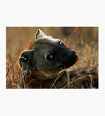 Kruger National Park, South Africa. 2009  IV Photographic Print