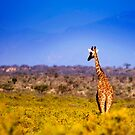Samburu National Reserve, Kenya. 2009 by Damienne Bingham