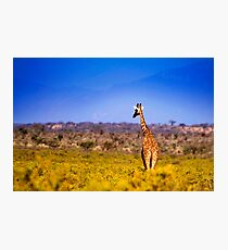 Samburu National Reserve, Kenya. 2009 Photographic Print