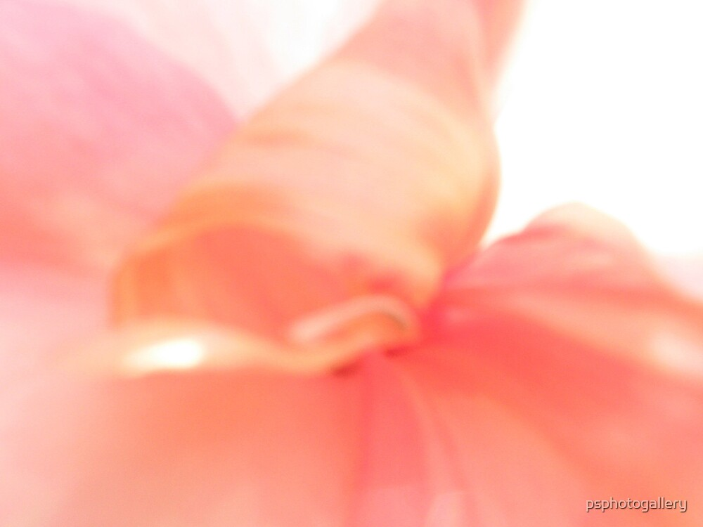 Flower in Abstract by psphotogallery