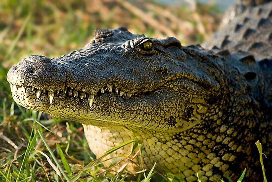 Chobe National Park, Botswana. 2009 III by Didi Bingham