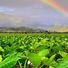 Hawaiian Taro Fields by DJ Florek