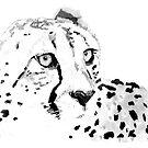 Cheetah by christinahewson