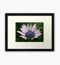 One Perfect and Tough Little Daisy Framed Print