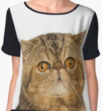 Exotic Shorthair cat with big yellow eyes Women's Chiffon Top