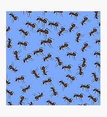 Animal Pattern. Ant Isolated on Blue Background. Photographic Print