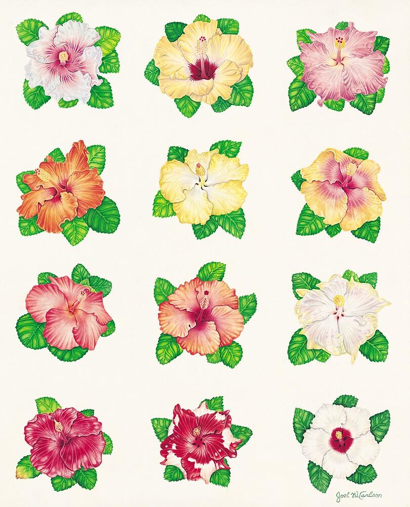 Hibiscus by joeyartist