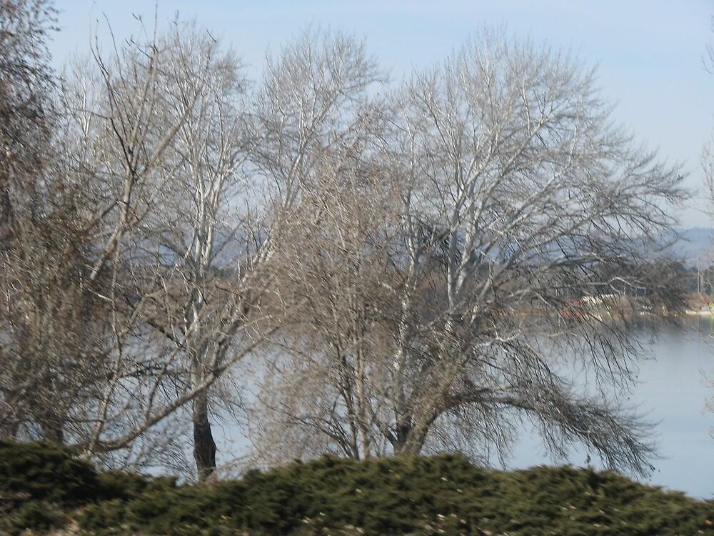 Trees by Meg Keamy