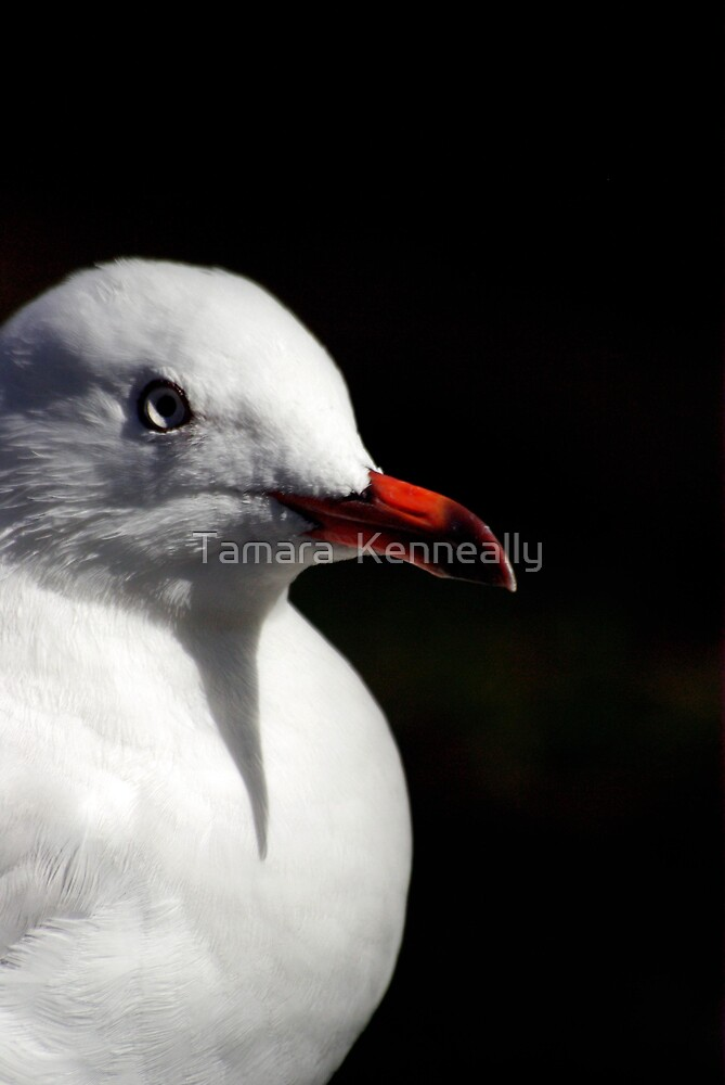 Seagull by Tamara  Kenneally