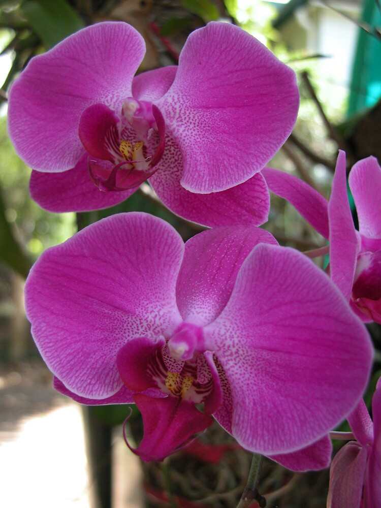 Purple & White Orchids by Nate White