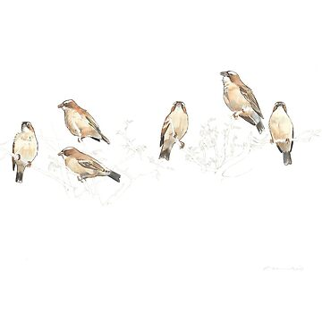 white-browed sparrow weaver family by E-M-Wood