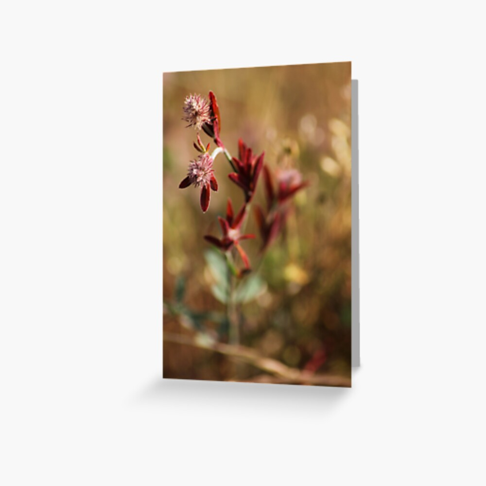 hare's foot trefoil, red leaves 2 Greeting Card