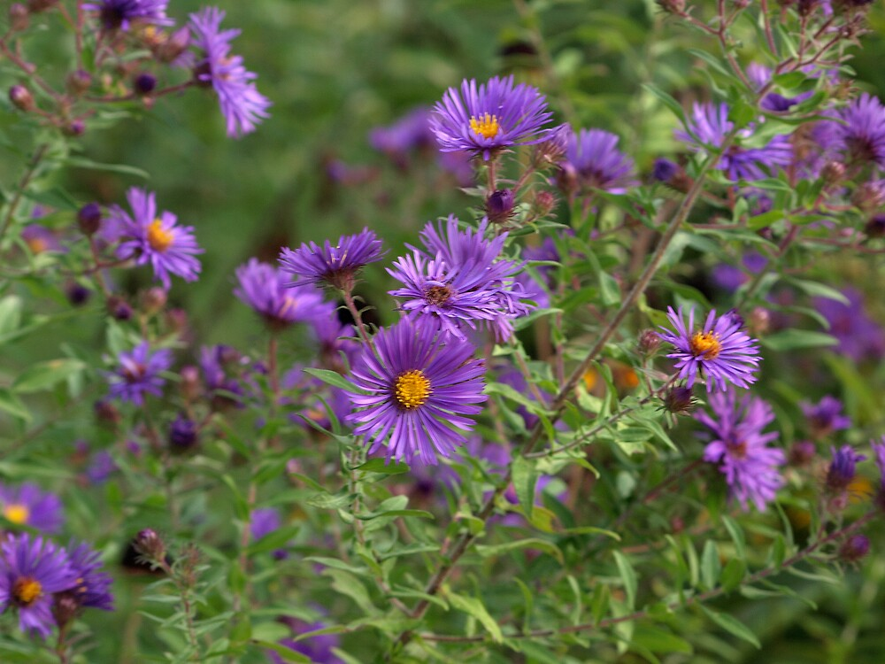 Wild Purple by Mark Dugan