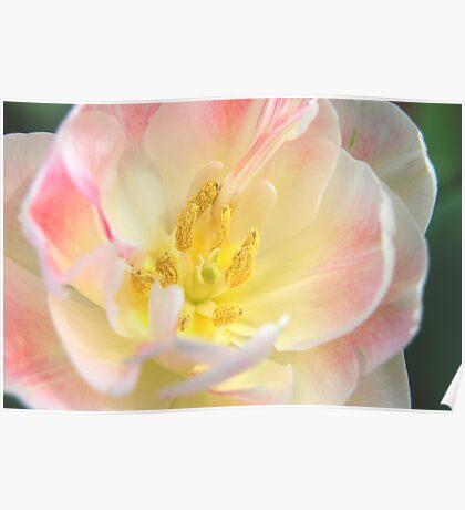 Blushing Bloom Poster