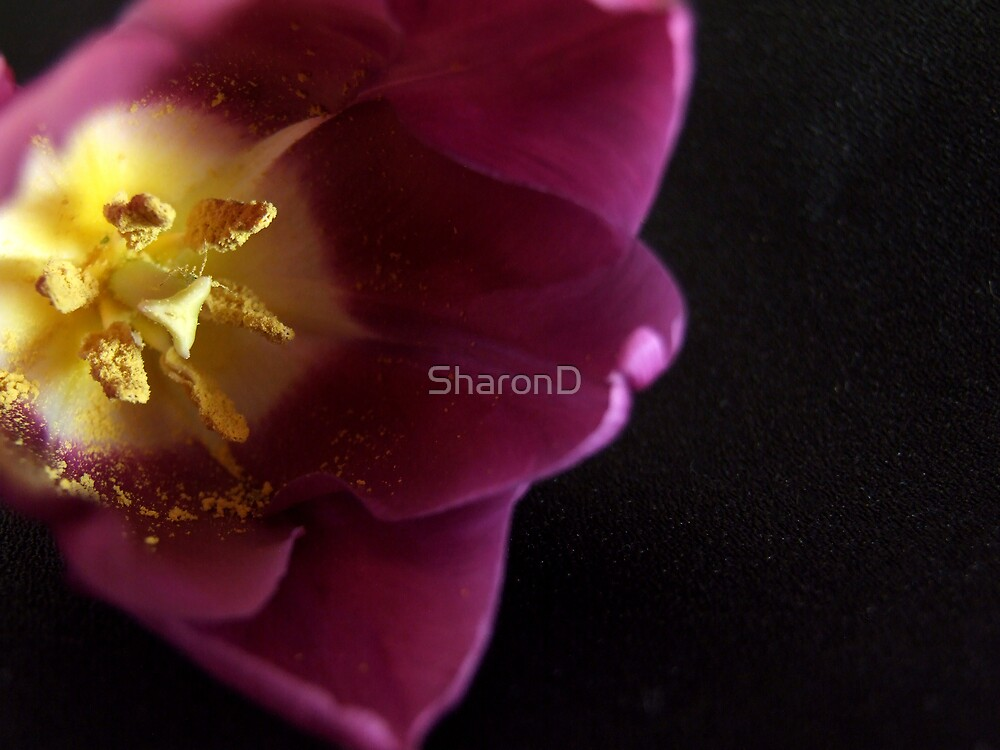 Look into My Heart by SharonD