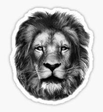 Lion Drawing  Sticker