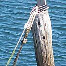 Shagged Pole! by Craig Watson