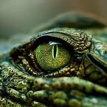 Eye of the Crocodile [iPad / Phone cases / Prints / Decor] by GreenEyedHarpy