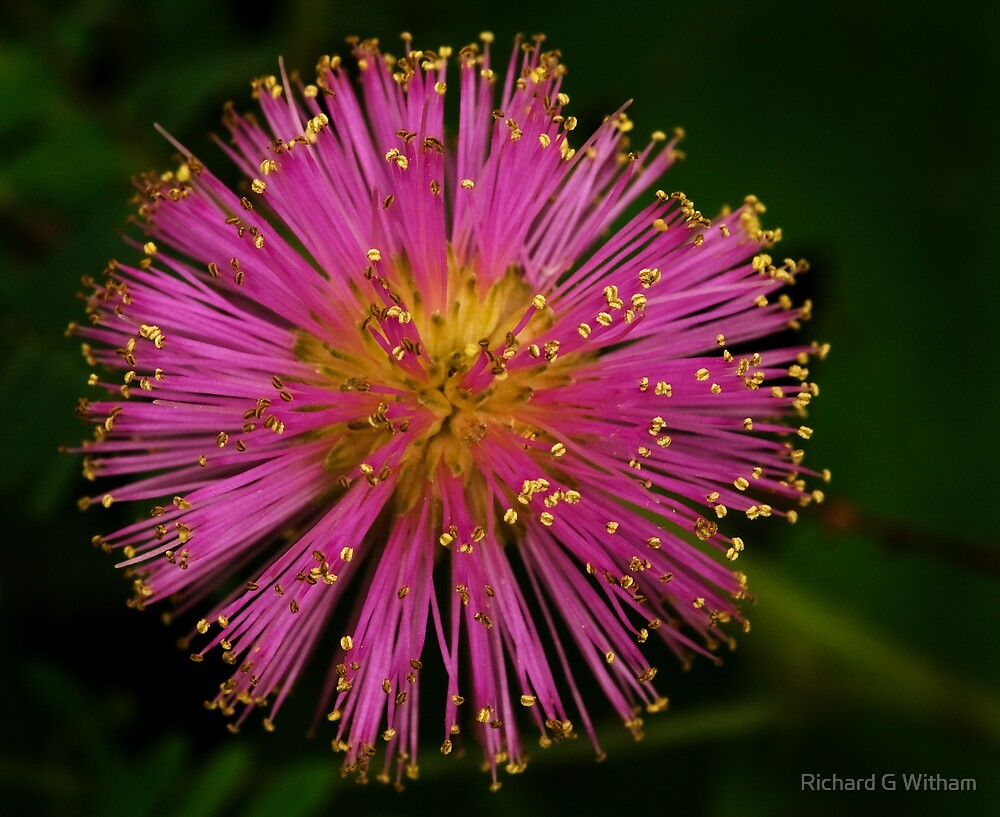 Nature's Fireworks by Richard G Witham