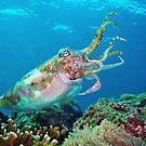 Cuttlefish by Christopher Hamilton Lansell