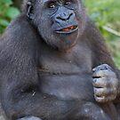 Mountain Gorilla by Steve Bullock
