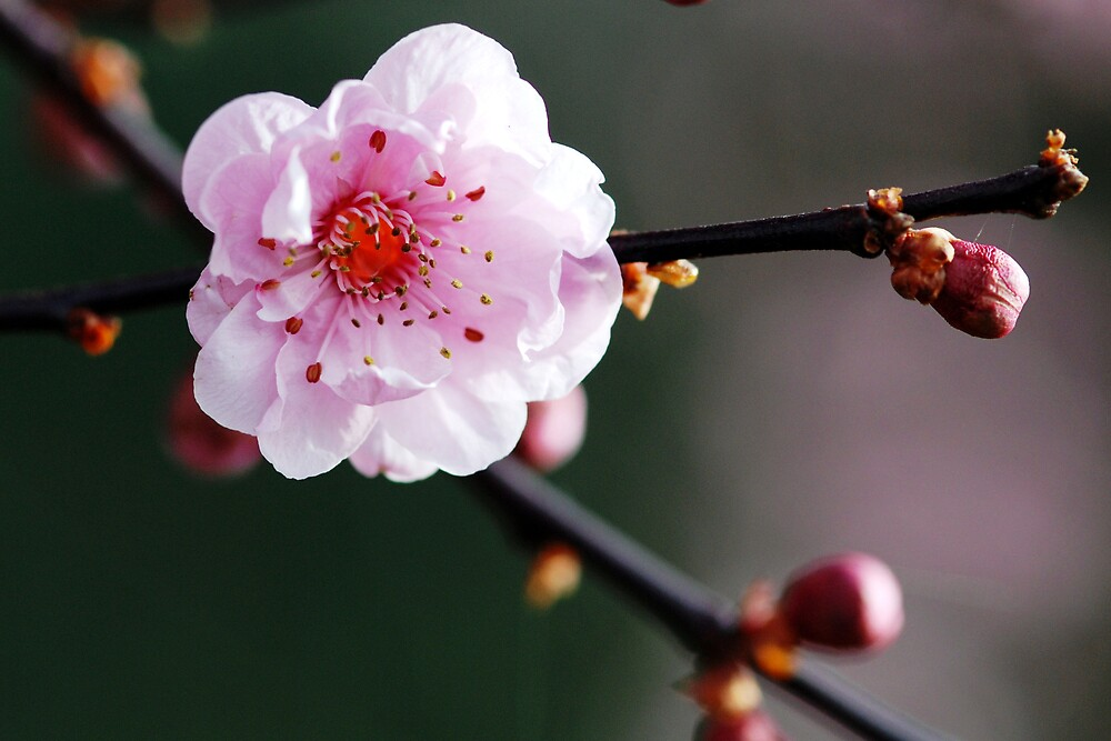 pink portent by sapaho