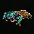 Orchid Cuckoo Bee by amydaggett