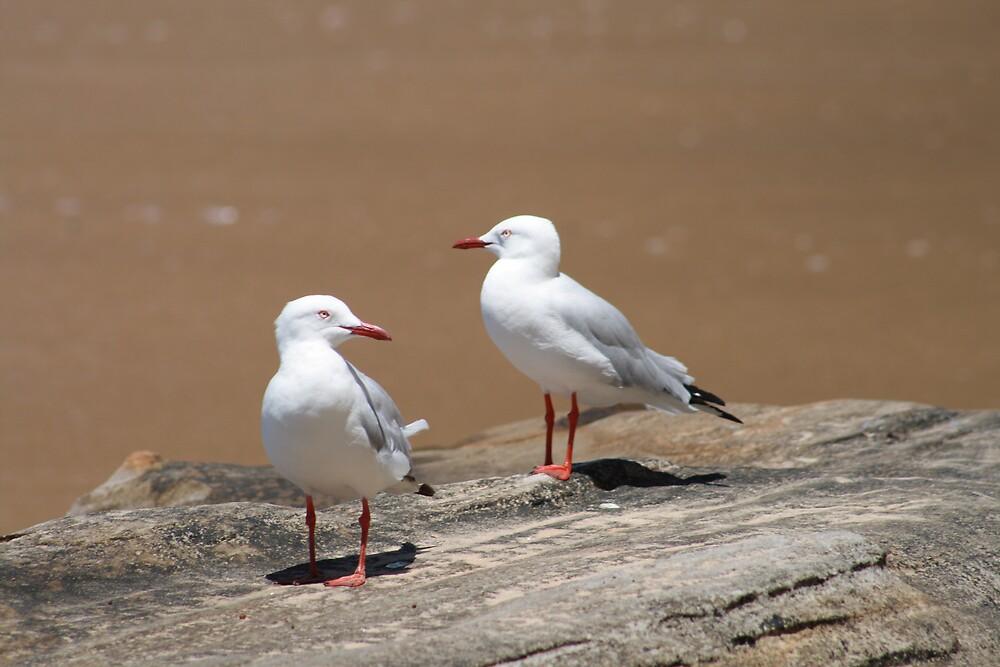 2 Seagulls, Flint & Steel Beach, Ku-ring-gai Chase National Park by Spirit Level Creations